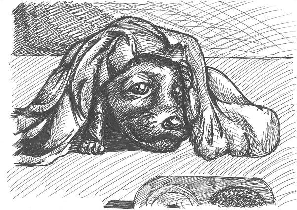 child-dog-joao-burlamaqui