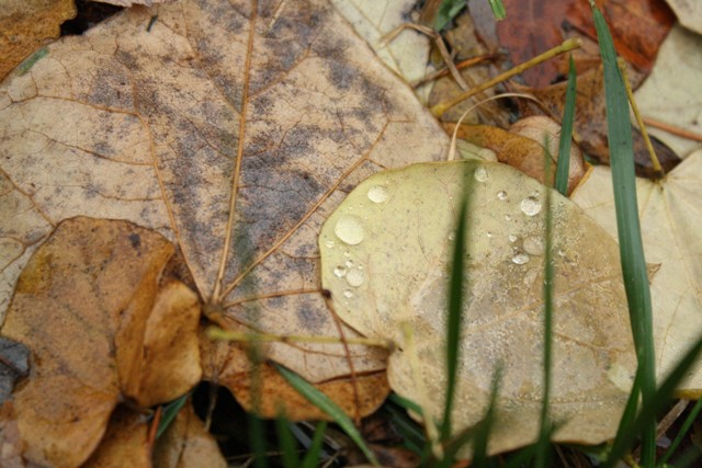 leaves-me-093