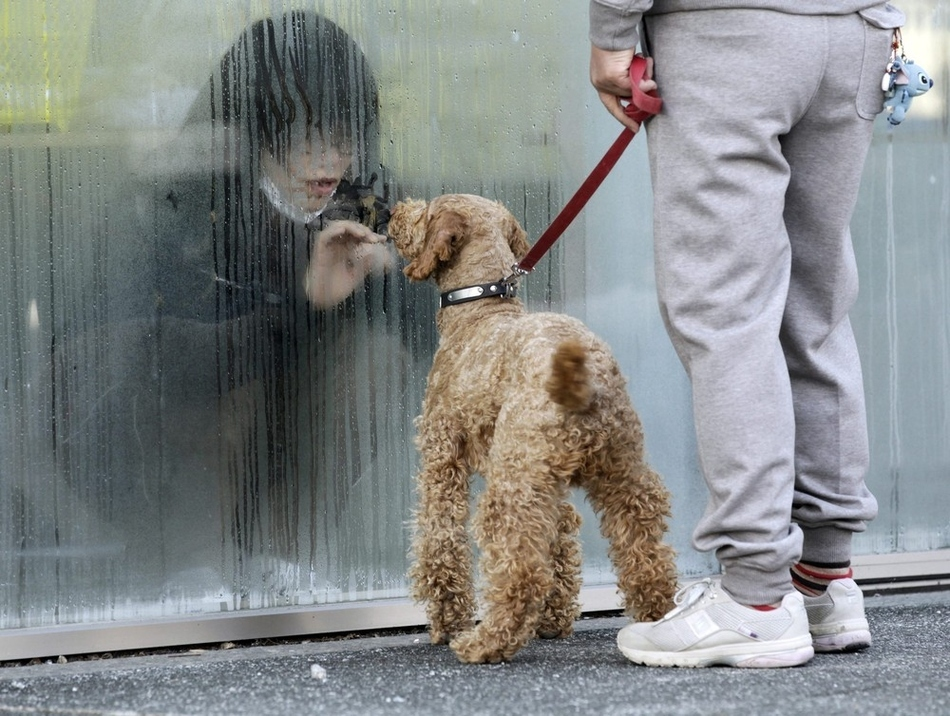 Κορίτσι στην Ιαπωνία, σε απομόνωση για έλεγχο ραδιενεργούς ακτινοβολίας, κοιτάζει τον σκύλο της.
