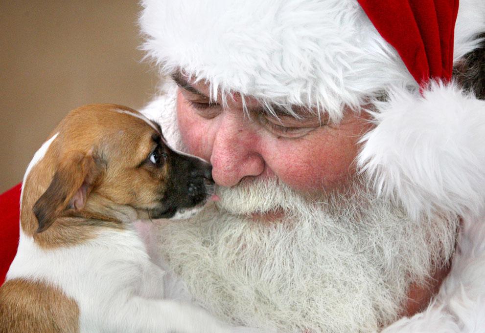 Άγιος Βασίλης παίρνει ένα φιλί από ένα αδέσποτο κουτάβι στο Esther L. Boyd Καταφύγιο Ζώων στο Winchester, Βιρτζίνια