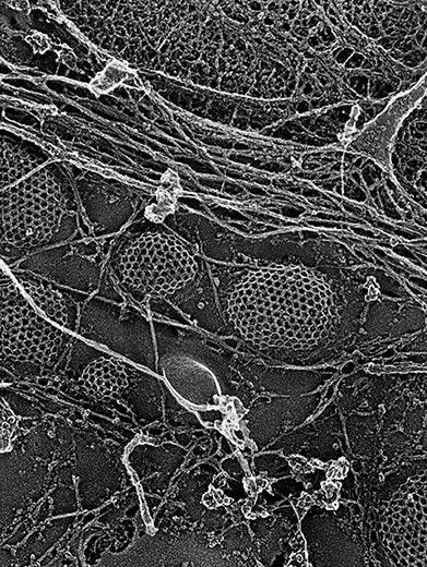 9-brains-neurons-communicating-9