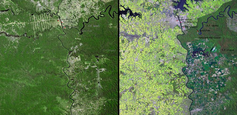 Παράδειγμα αποψίλωσης σε ένα από τα πλέον απειλούμενα τροπικά δάση στη Γη. Το Δάσος του Ατλαντικού, το οποίο «μοιράζονται» Βραζιλία, Παραγουάη και Αργεντινή, έχει περιοριστεί μόλις στο 7% της αρχικής έκτασής του. Τα μεγαλύτερα επίπεδα αποψίλωσης παρατηρούνται στην Παραγουάη. Μεγάλο τμήμα του δάσους έχει μετατραπεί σε βιομηχανικής κλίμακας φυτείες σόγιας.
