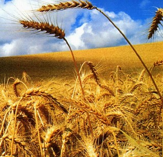 Για ποια ελληνική αγροτική παραγωγή μιλάμε;