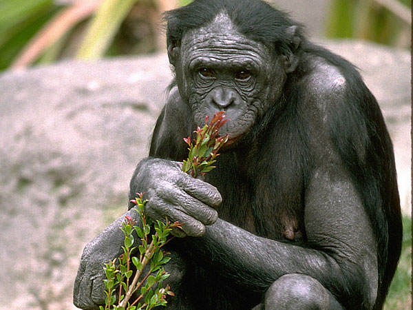 Frans de Waal: O πίθηκος μέσα μας
