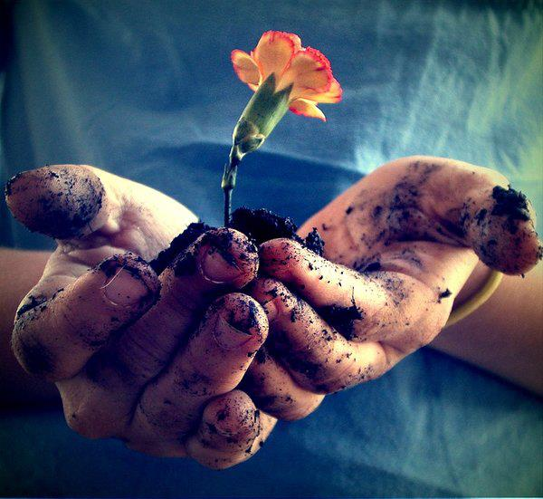 hands-dirt-flower