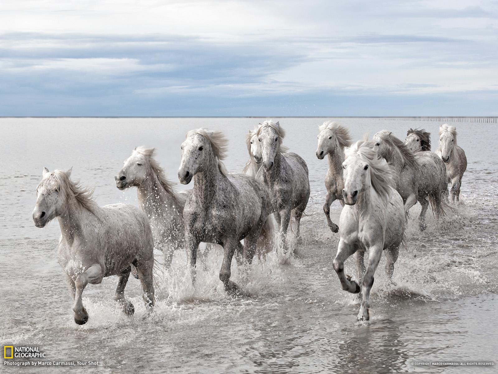 Άγρια άλογα, Γαλλία