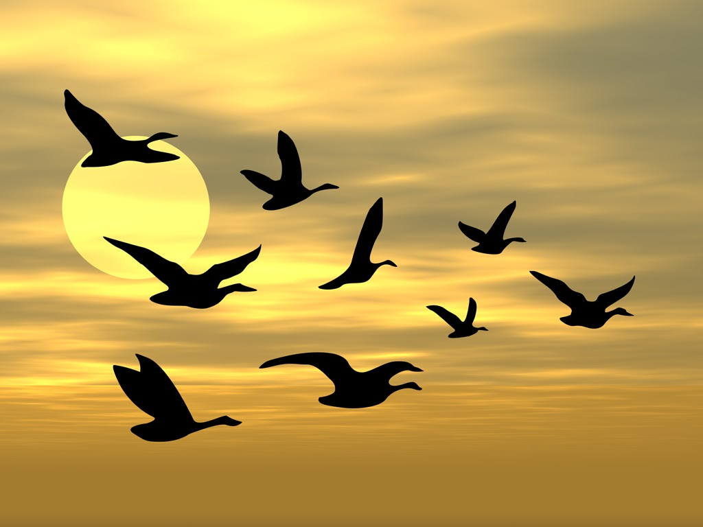 sky and birds screensaver