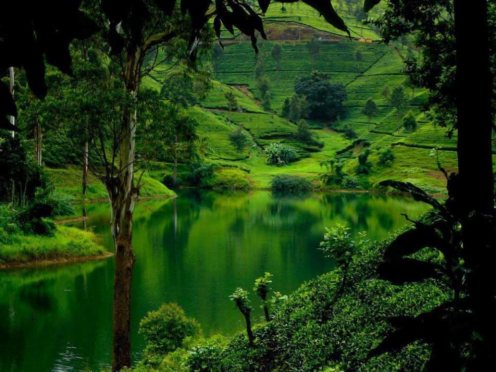 Καταπράσινοι λόφοι στην Σρι Λάνκα
