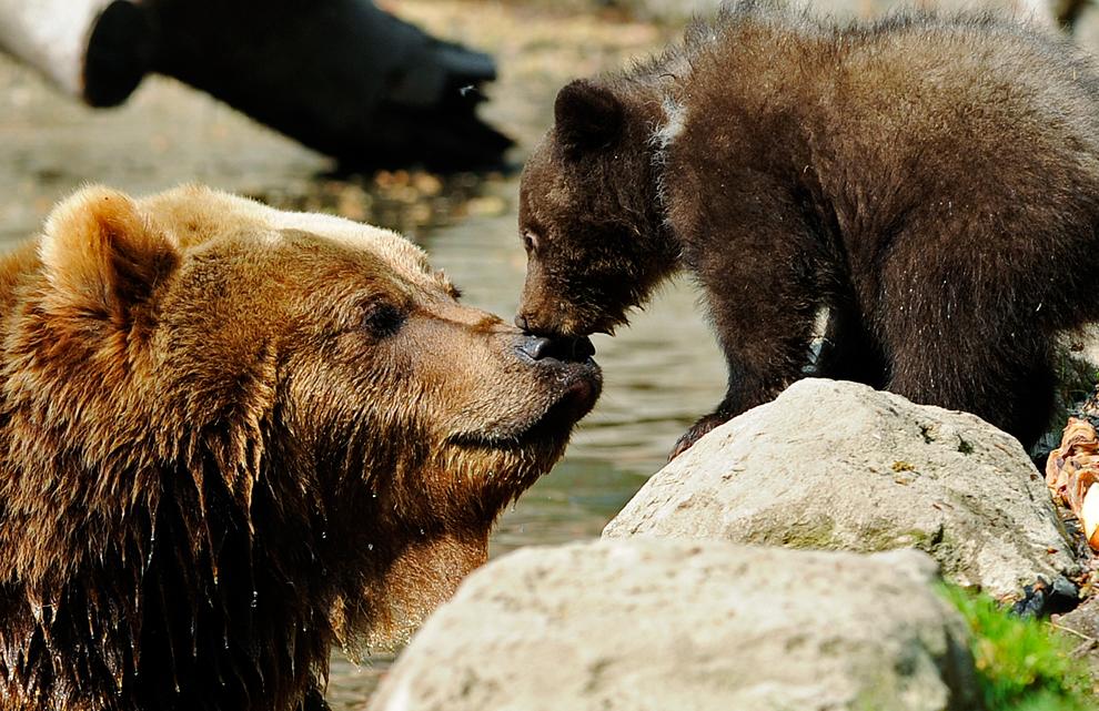 Μητρική αγάπη.  Ζωολογικός κήπος στο Αμβούργο της Γερμανίας.