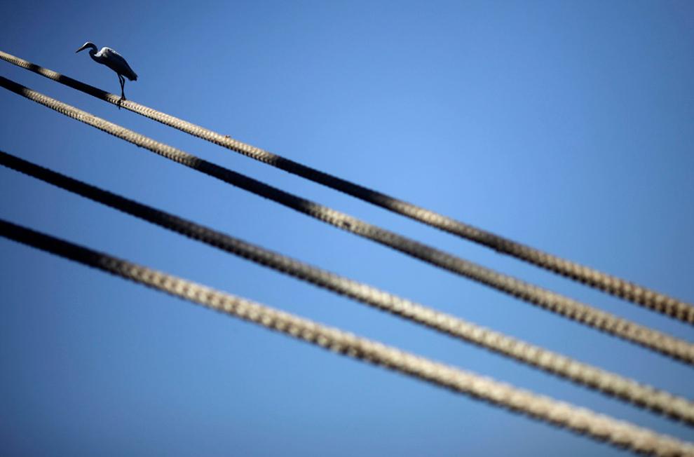 ερωδιός στάθηκε σε ένα σχοινί πρόσδεσης πλοίου στο Ρίο ντε Τζανέιρο