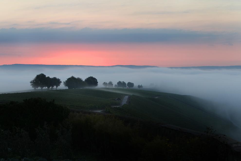 Πρωινή ομίχλη σε αμπελώνες κοντά στο Escherndorf, Γερμανία