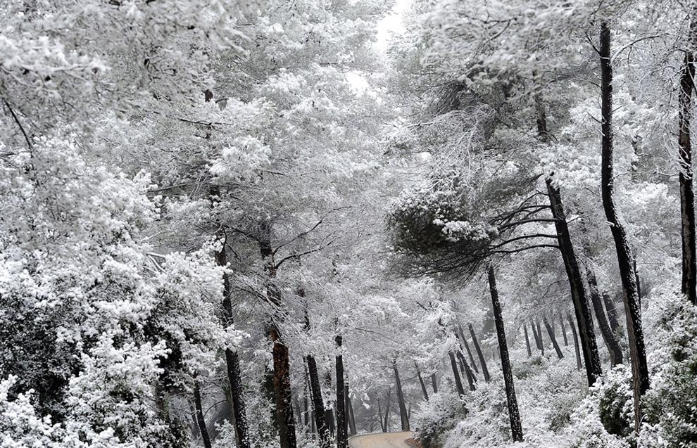 Χιόνι κάλυψε τα δέντρα στο Rubi, Ισπανία.
