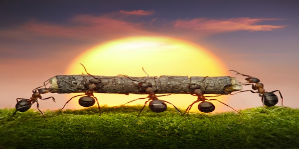 ants.collaboration