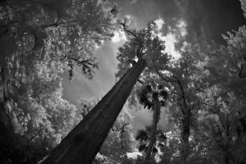 the-senator-cypress