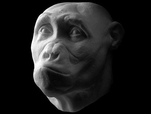 Sahelanthropus tchadensis: έζησε πριν 6,8 εκατομμύρια χρόνια. Μέρη του οστού της γνάθου και των δοντιών του βρέθηκαν πριν από εννέα χρόνια στην έρημο Djurab στο Τσαντ. Είναι ένα από τα παλαιότερα δείγματα ανθρωποειδών που βρέθηκαν ποτέ.