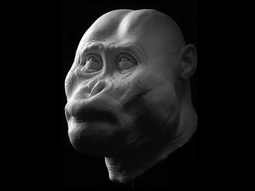 Paranthropus aethiopicus: Έζησε πριν 2,5 εκατομμύρια χρόνια. Βρέθηκε στη δυτική όχθη της λίμνης Τουρκάνα στην Κένυα το 1985. Το σχήμα του στομίου δεικνύει ότι μπορούσε να δαγκώσει πολύ δυνατά και ότι μπορούσε να μασήσει φυτά.
