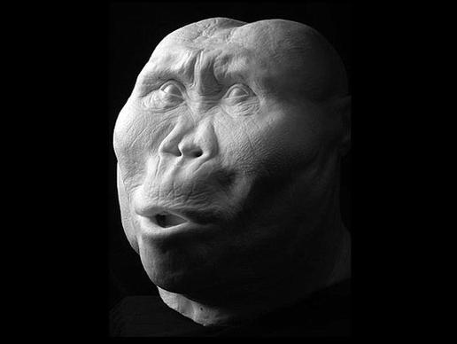 Paranthropus boisei: έζησε πριν 1,8 εκατομμύρια χρόνια.  Έτρωγε σπόρους, φυτά και ρίζες που έβρισκε σκάβοντας πιθανώς ίδιος με ξύλα ή οστά.