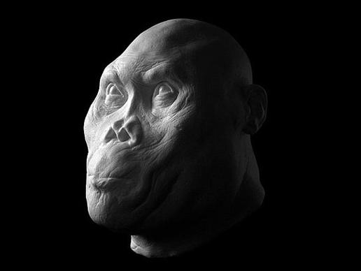 Rudolfensis Homo: έζησε πριν περίπου 1,8 εκατομμύρια χρόνια. Χρησιμοποιούσε λίθινα εργαλεία και έτρωγε το κρέας και φυτά.