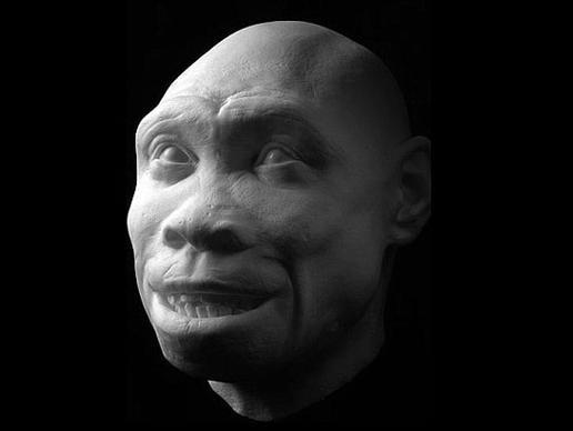 "Homo ergaster: Ο συγκεκριμένος  σκελετός του «Αγόρι Τουρκάνα"", που βρέθηκε σε πολύ καλή κατάσταηση  είναι μια από τις πιο θεαματικές ανακαλύψεις στην Παλαιοανθρωπολογία. Κρίνοντας από την ανατομία του, οι επιστήμονες πιστεύουν ότι ήταν ένας ψηλός νέος ηλικίας περίπου 13 έως 15 ετών."