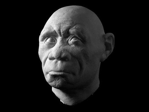 "Homo floresiensis: Το κρανίο και το σαγόνι του θηλυκού ""hobbit"" βρέθηκε στην Ινδονησία, το 2003. Ήταν περίπου 1 μέτρο ύψος  και έζησε περίπου πριν 18.000 χρόνια. Η ανακάλυψη του Homo floresiensis, έθεσε σε αμφισβήτηση την πεποίθηση ότι ο Homo sapiens ήταν η μόνη μορφή ανθρώπου  τα τελευταία 30.000 χρόνια."