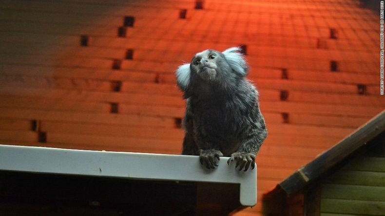 """""""Ένας πίθηκος σε έναν μίνι ζωολογικό κήπο"""", τραβήχτηκε από τον  14χρονο Eugene Konopleva, από την Ουκρανία."""