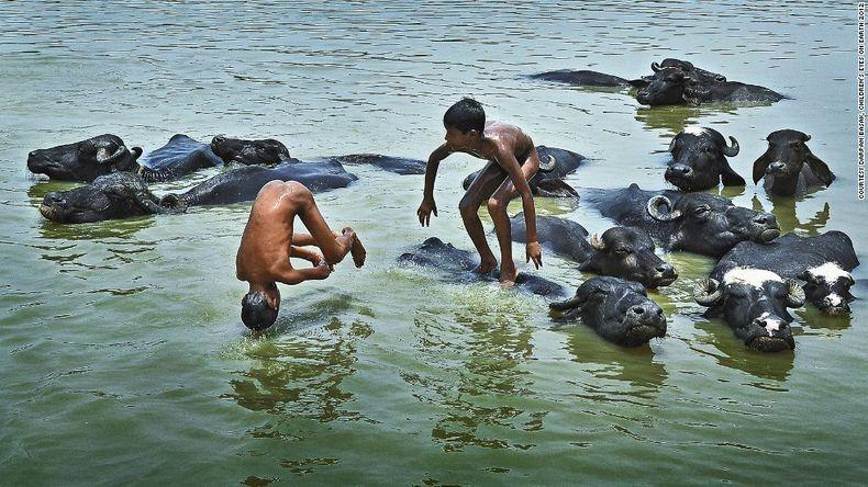η 9χρονη Darpan Basak τράβηξε τα παιδιά που παίζουν σ ένα ποτάμι μαζί  με βουβάλια.