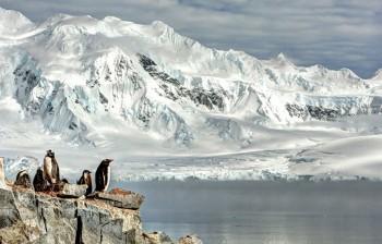 Πιγκουΐνοι στην Ανταρκτική