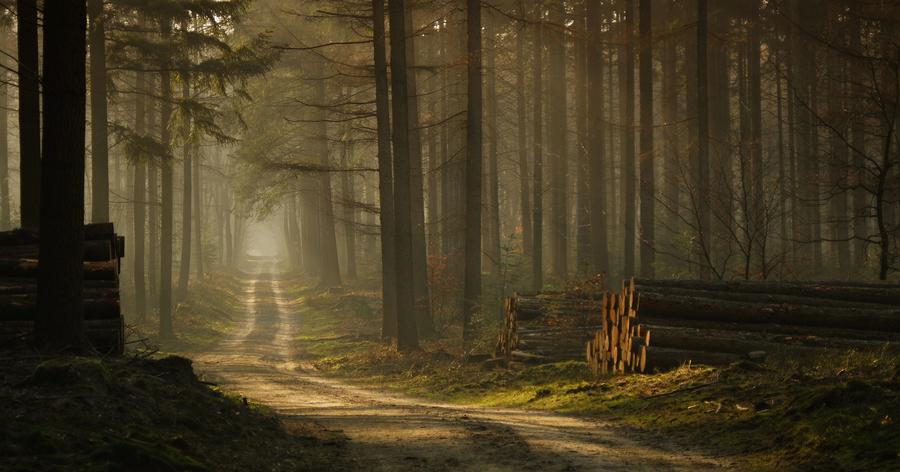 Μια βόλτα στο δάσος