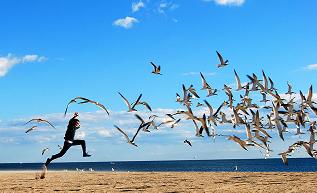 chasing-birds2