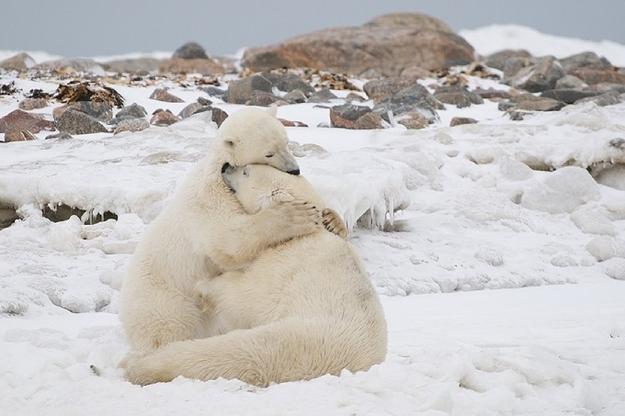 Αγκαλιές ζώων