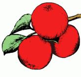 apples_