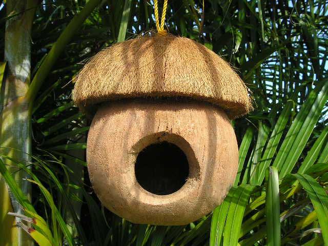 coconut_bird_house
