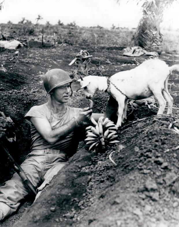 στρατιώτης μοιράζεται μπανάνες μαζί με μια κατσίκα κατά τη διάρκεια της μάχης του Σαϊπάν, 1944.