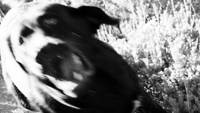angry-dog_fe