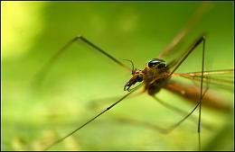 Ποιους προτιμούν τα κουνούπια;