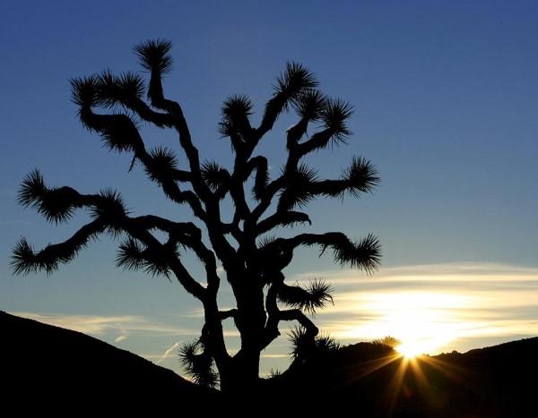 Εθνικό Πάρκο Τζόσουα Τρι, Καλιφόρνια, Αμερική