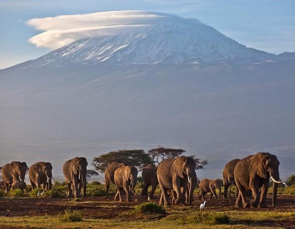Όρος Κιλιμάντζαρο, Τανζανία