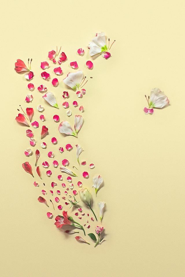 Πίνακες από πέταλα λουλουδιών -7