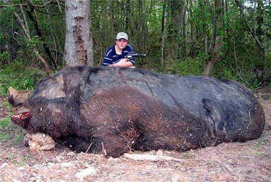 Το τεράστιο γουρούνι