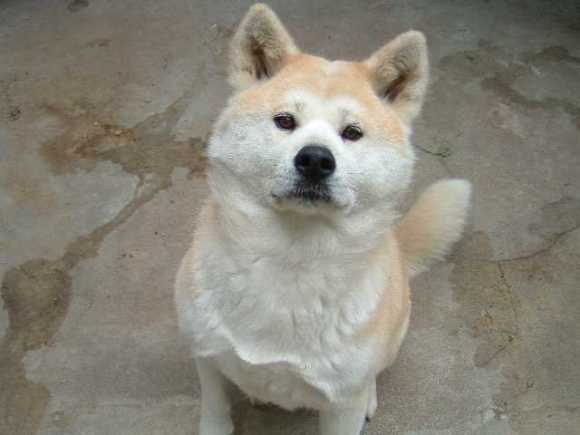 Hachiko-A-Dog-s-Story-hachiko-a-dogs-story-14893537-1280-960.img_assist_custom