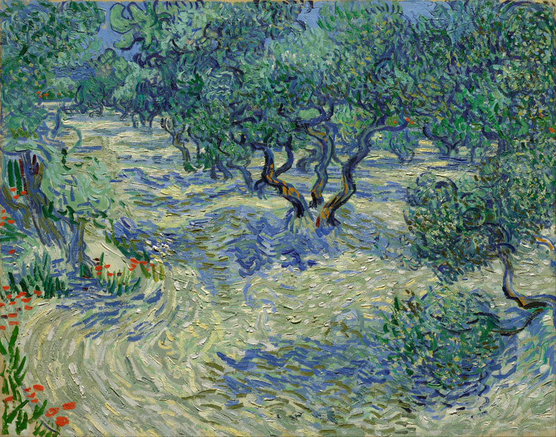Olive Orchard / Olive Grove – 1889