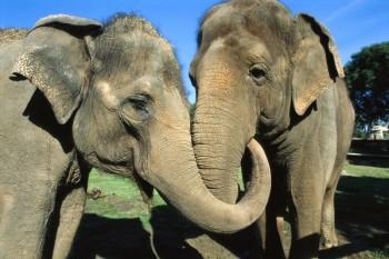 elephants-newswatch