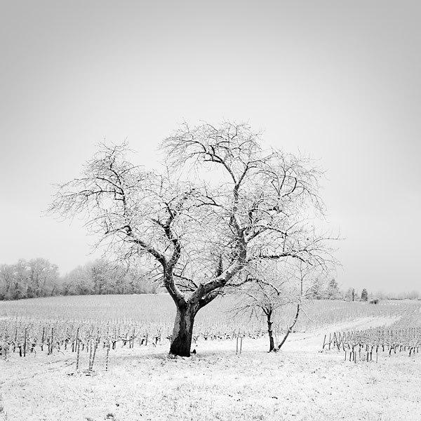 fine-art-photography-by-laurent-dudot1