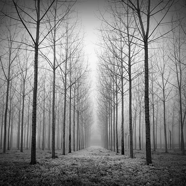 fine-art-photography-by-laurent-dudot6