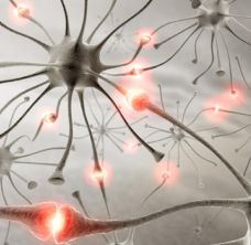 neuroplasticity_resize