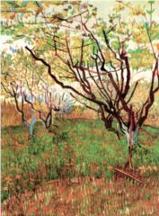 orchard-in-blossom-18883