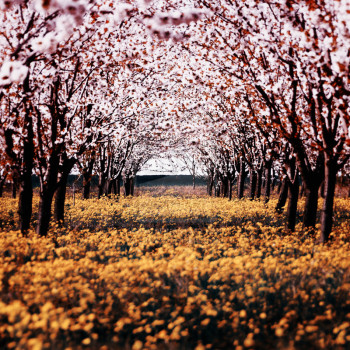 spring_by_f_f_w_d-d1c