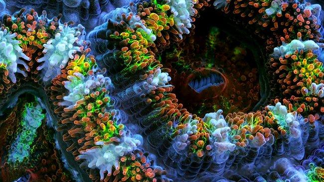 daniel-stoupin-slow-life-corals-3.jpg.650x0_q85_crop-smart
