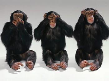 monkeys_monkeys-1__article