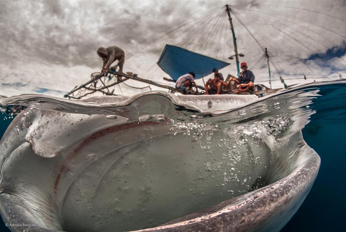 """""""το μεγάλο στόμα"""" (βλέπουμε μια φάλαινα) της Adriana Basques από τη Βραζιλία"""